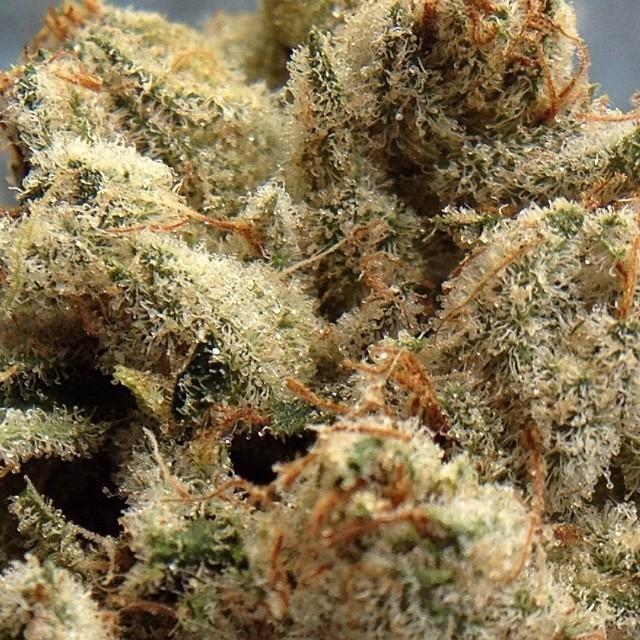 true-og-weed-2