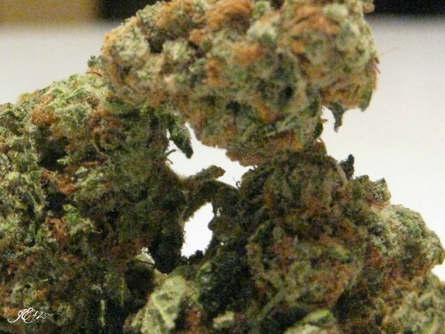 black-label-kush-weed-2