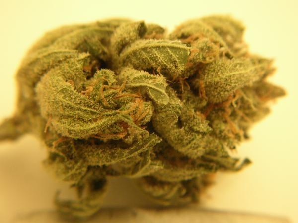 dp-weed-1