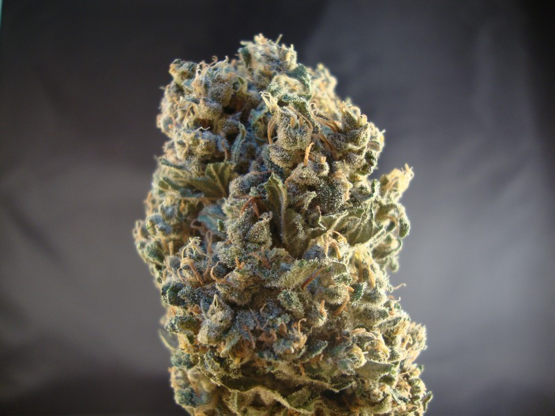 durban-poison-weed