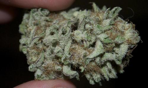 raspberry-kush-weed-2