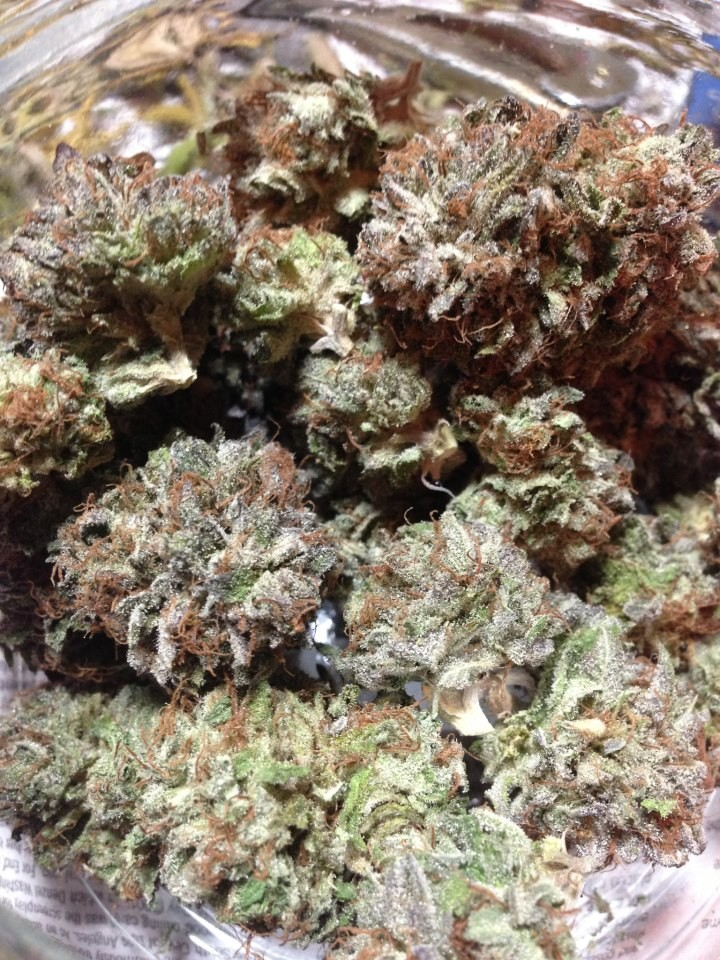 blue-widow-weed-4