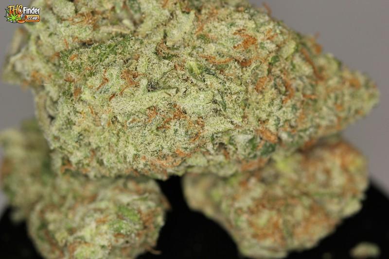 bubblegum-weed-4