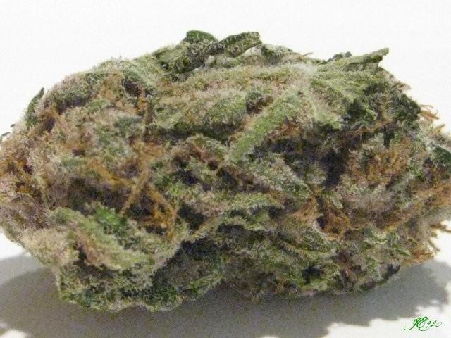 black-jack-weed-3