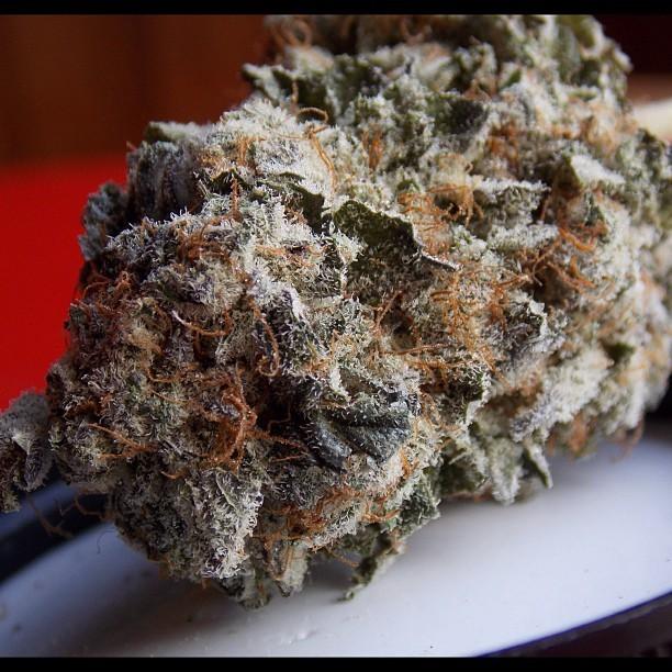 jill-bean-weed-2