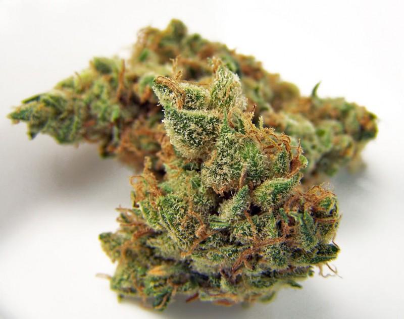 jilly-bean-weed-4