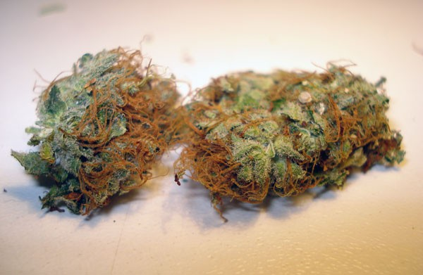 sweet-tooth-weed-5