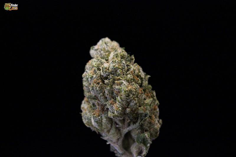 og-weed-sativa-2