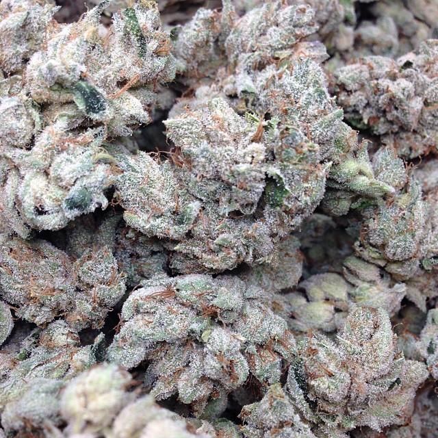 og-weed-sativa