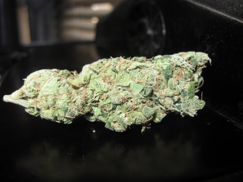 chem-dawg-weed-4