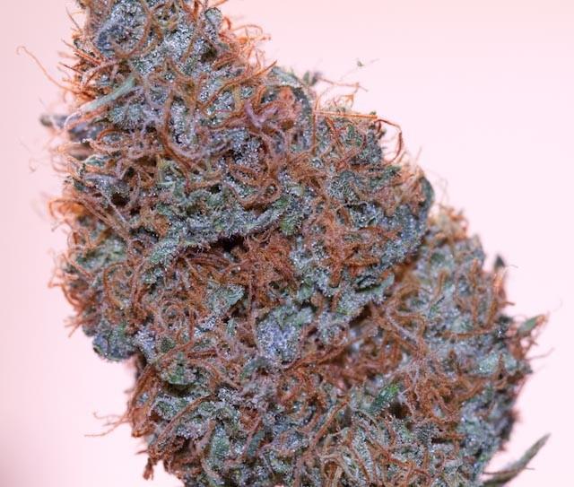 afghan-kush-weed-4