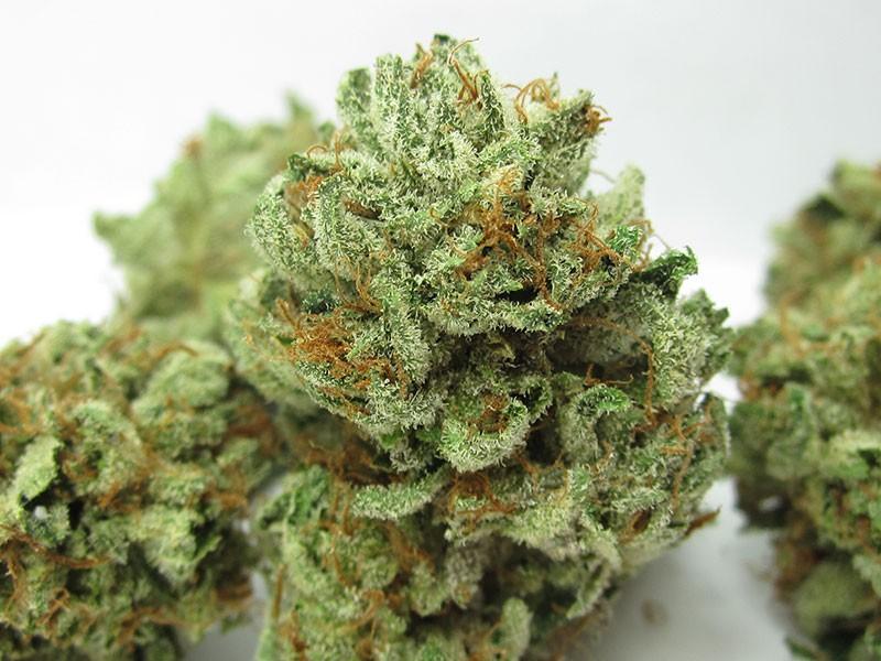 master-kush-weed-1