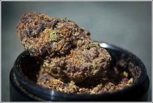 purple-dream-weed-4