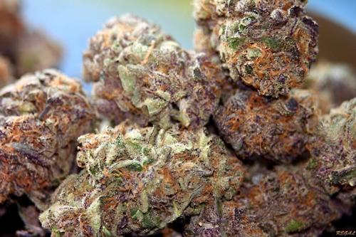 purple-dream-weed-3