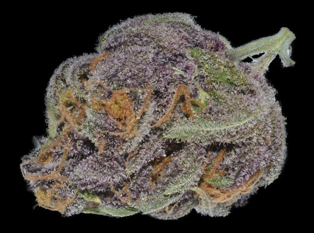 purple-dream-hybrid-weed