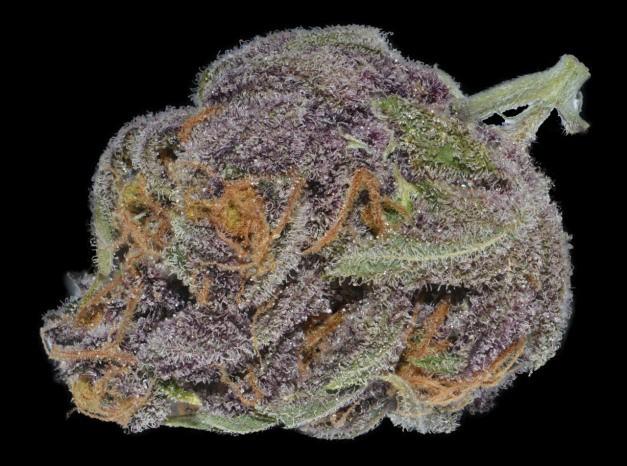purple-dream-hybrid-weed