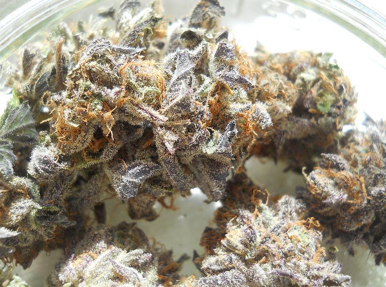 obama-kush-weed-2