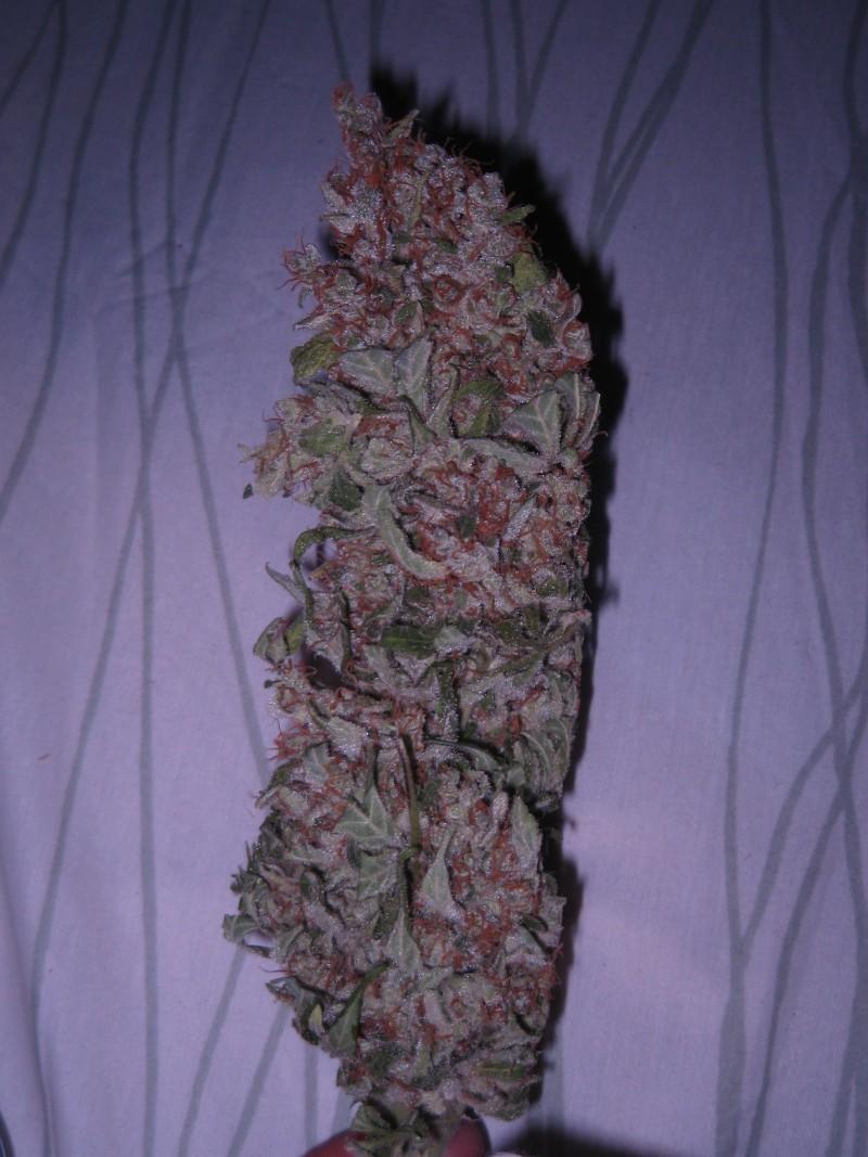 obama-kush-weed-3
