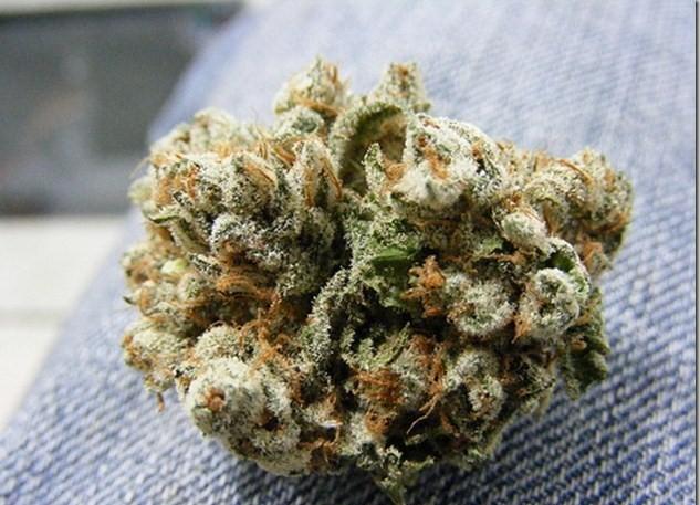 gods-gift-weed-3