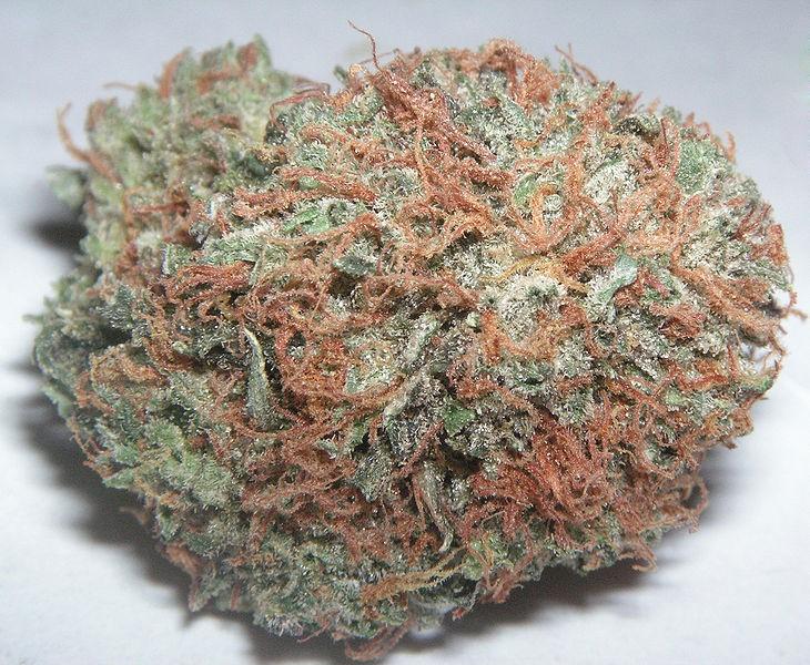 pineapple-kush-weed-4