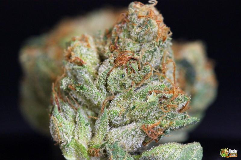 yodas-brain-weed-2