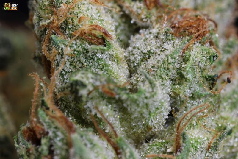 yodas-brain-weed-1