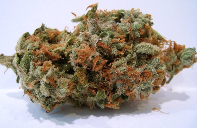 super-silver-haze-weed-4