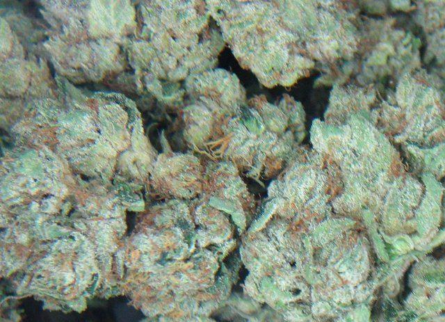 skywalker-weed-3
