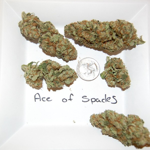 ace-of-spades-weed