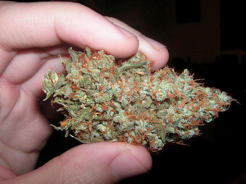 trainwreck-weed-hybrid-5