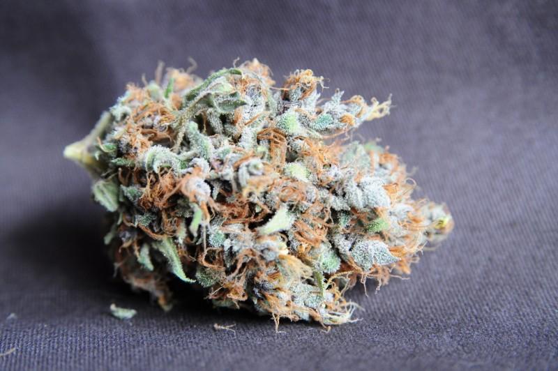 purple-urkle-weed-4