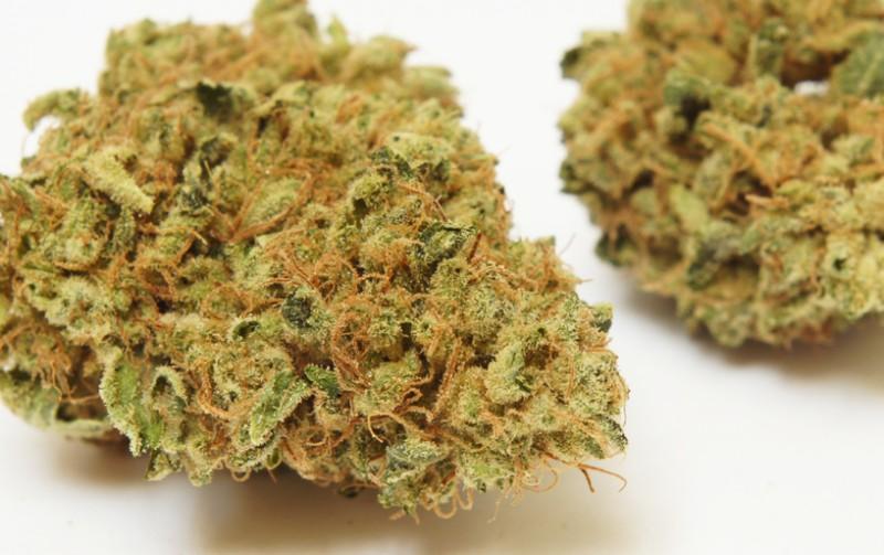 Hybrid nugs marijuana blog thc finder dispensaries thc finder