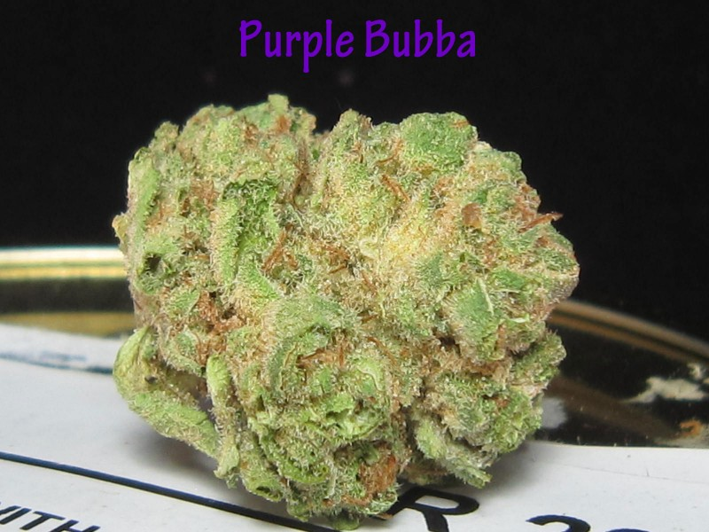 purple-bubba-4