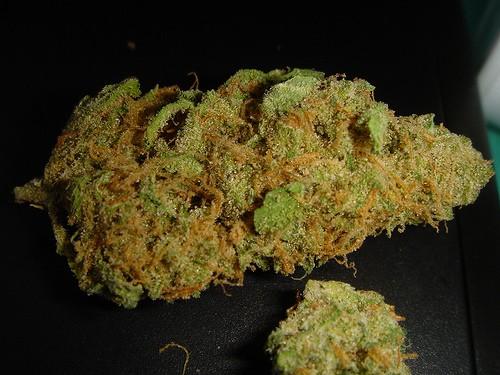 mr-nice-weed-4