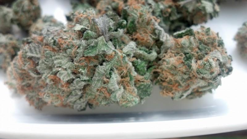 bubba-kush-weed-5