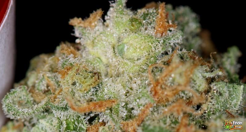 afwreck-hybrid-weed