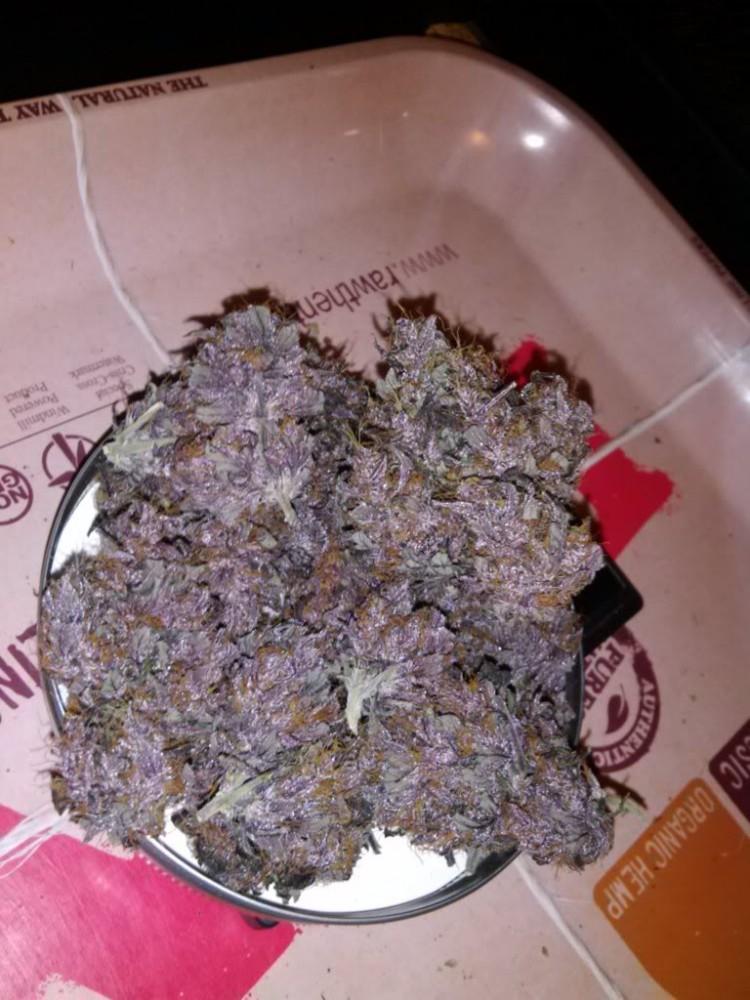 purple-kush-weed-1