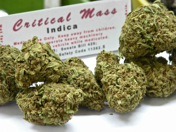 critical-mass-weed-3