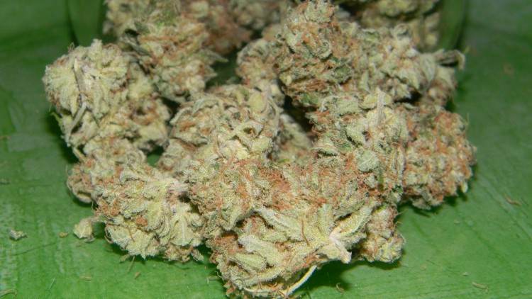 critical-mass-indica-weed
