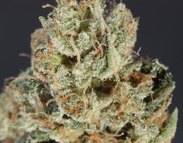 diablo-og-weed-1