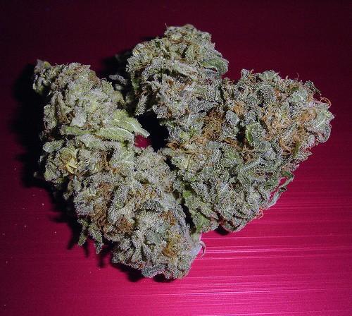 sensi-start-weed-3