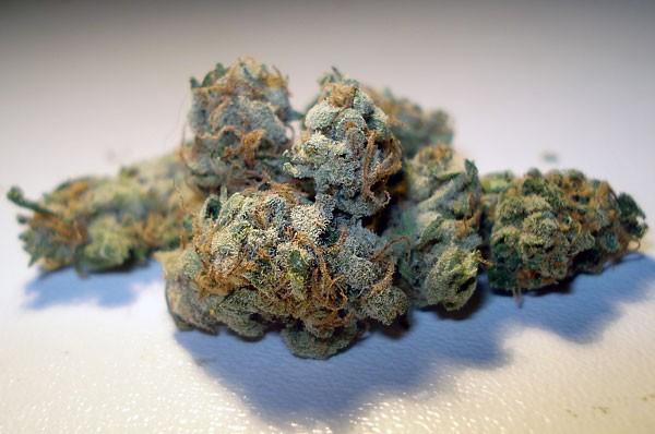 sensi-star-weed