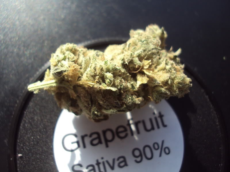 grapefruit-4