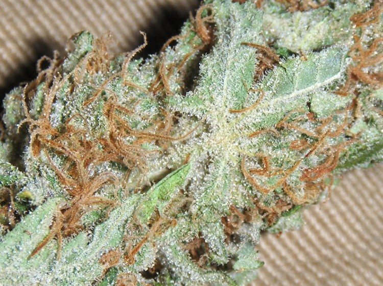 white-russian-weed-3