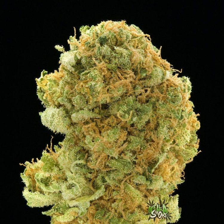 lemon-kush-hybrid-weed