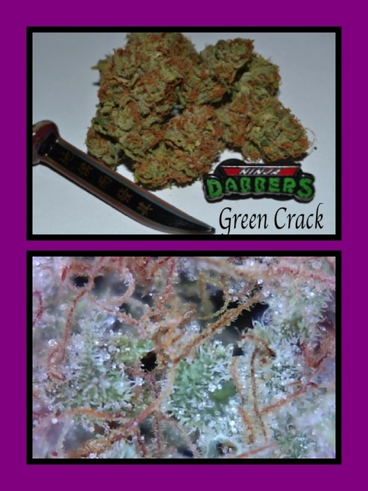 Green crack kush thc content. minecraft 1.5 2 crack mac. buzz tools keygen.