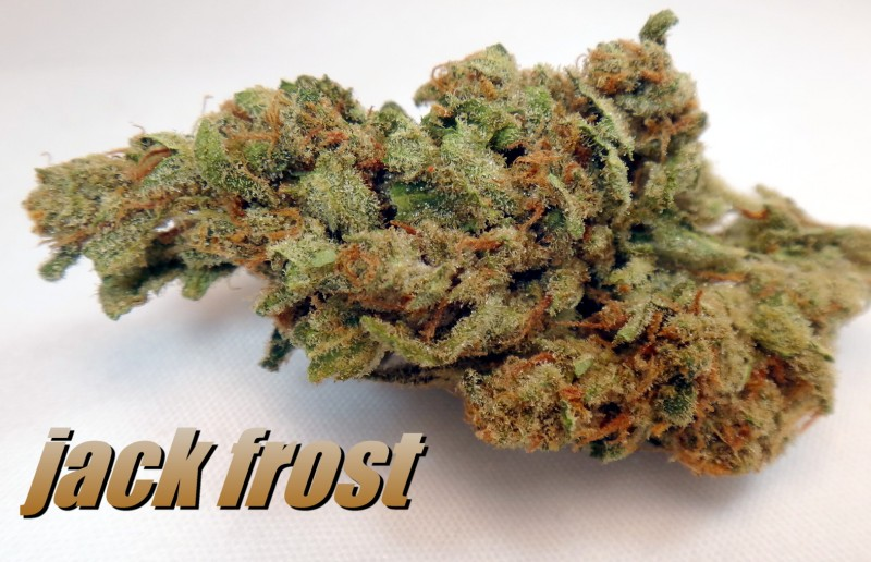 jack-frost-weed