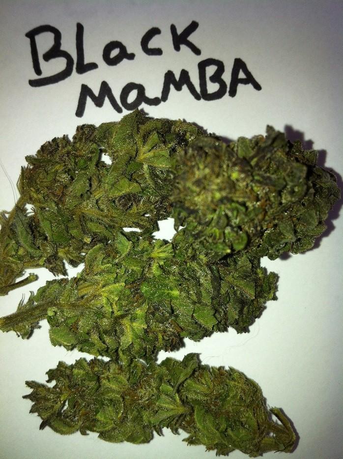 медицинский сорт марихуанны черная мамба