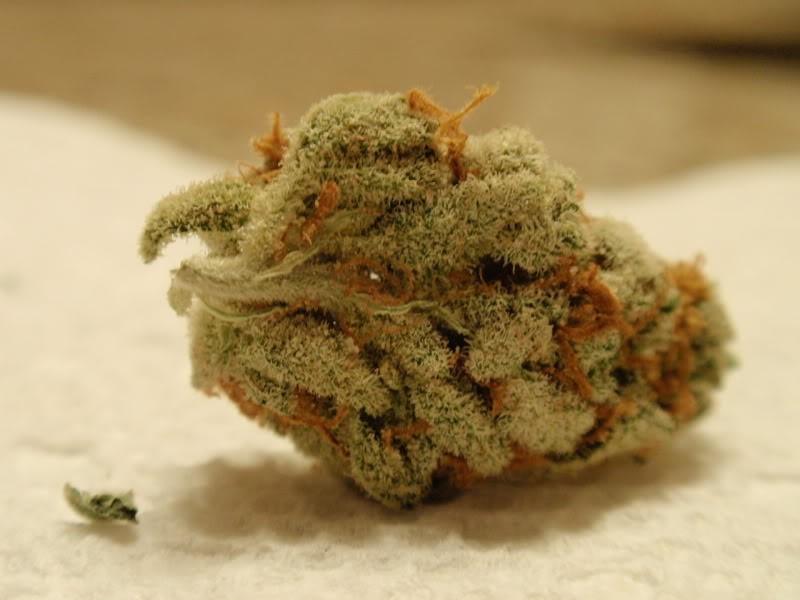 mango-weed