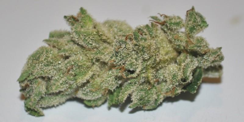 skywalker-weed-1